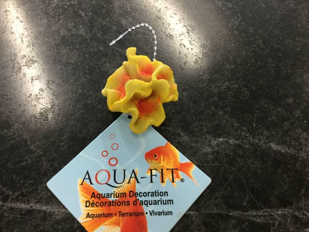 Aqua-Fit Hammer Coral-1