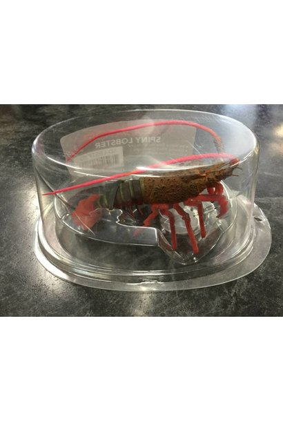 Aquatop Spiny Lobster Red 4in Silicone