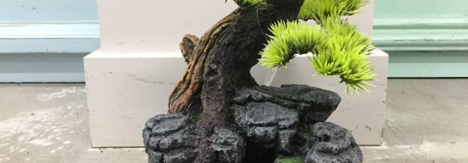 Aqua Della Bonsai on Rock