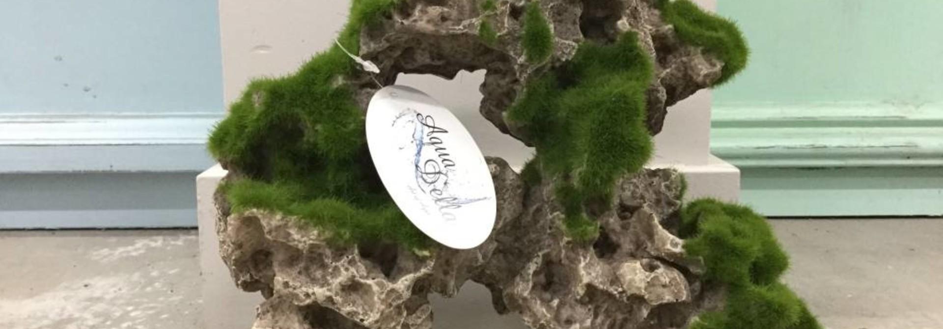 Aqua Della Moss Rock L