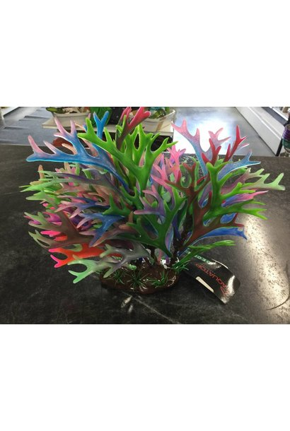 Plant Staghorn 10in Blue/Green/Red/Pink