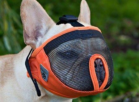 Short Snout Muzzle S Charcoal-1