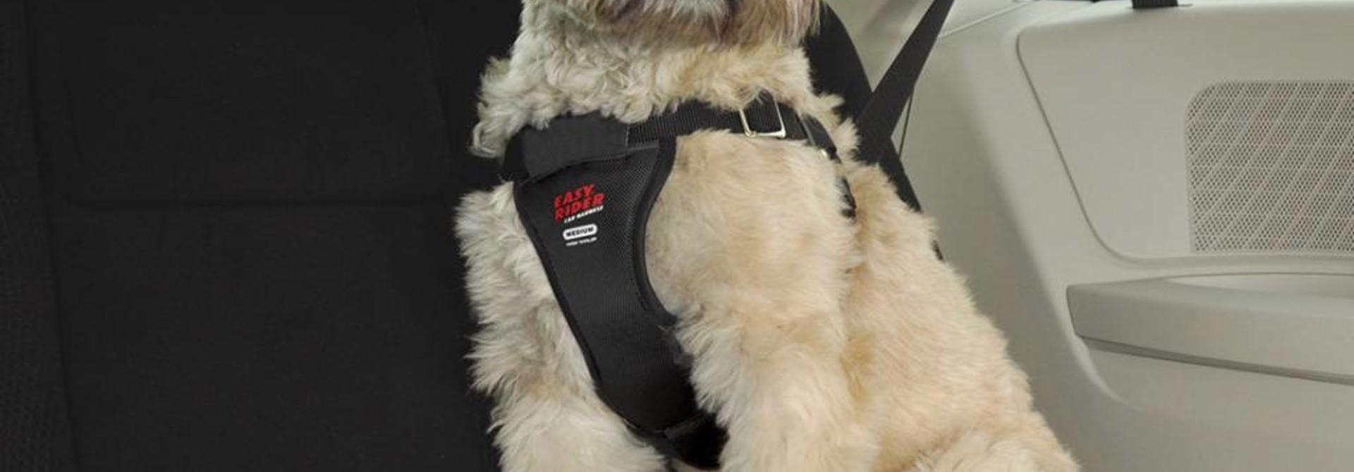 Easy Rider Seat Belt Accessory