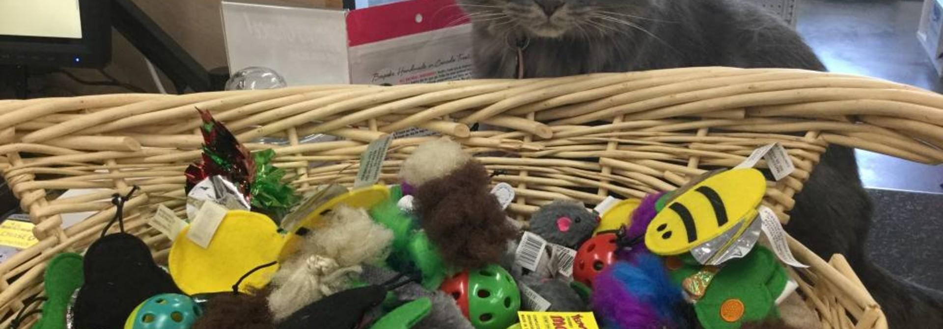 Harriet's Favorite Cat Toys