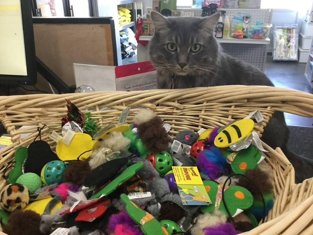 Harriet's Favorite Cat Toys-1