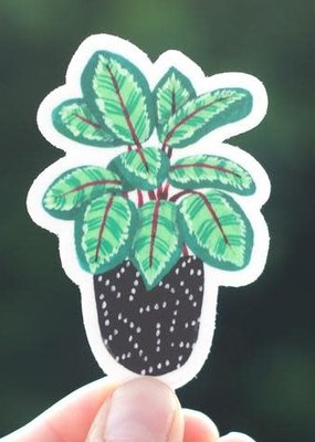 Cactus Club Sticker Calathea