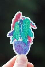Cactus Club Sticker Begonia Maculata