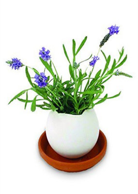 noted Eggling Lavender de Provence