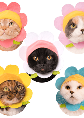 Kitan Club Cat Cap Blind Box Flower