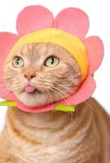 Kitan Club Cat Cap Blind Box Flower