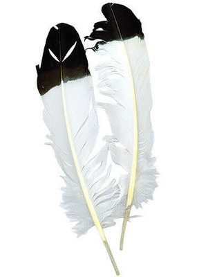 "Zucker Eagle Quills 10-14"" 2 Pieces"
