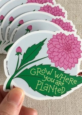 ACBC Sticker Grow Where Planted