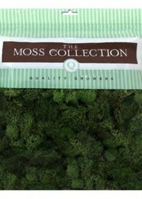 Quality Growers Quality Growers Reindeer Moss Basil