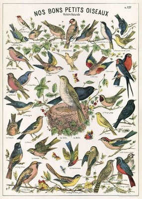Cavallini Papers & Co. Animal Themed Cavallini Posters/Wrap