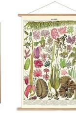 Cavallini Plant Themed Cavallini Posters/Wrap