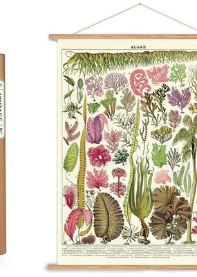 Cavallini Papers & Co. Plant Themed Cavallini Posters/Wrap