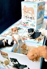 Blind Box Shiba Inu