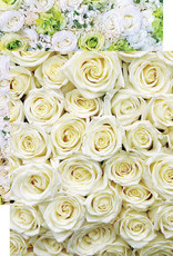 Reminisce 12x12 Paper White Roses