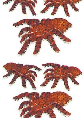 Jillson & Roberts Stickers Prismatic Tarantulas