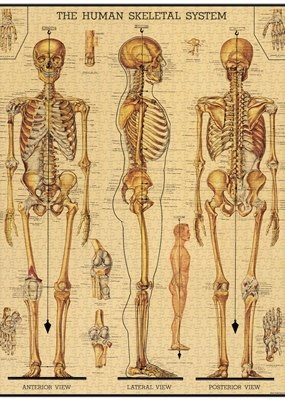 Cavallini 1000 Piece Jigsaw Puzzle Skeletal System