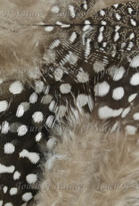 Touch of Nature Feathers Guinea Fowl Plumage 4 Grams