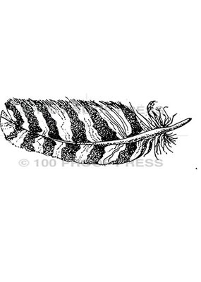 100 Proof Press Stamp Hawk Feather