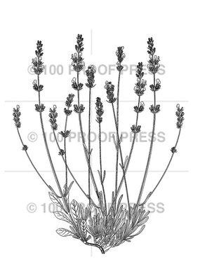 100 Proof Press Stamp Lavender Plant
