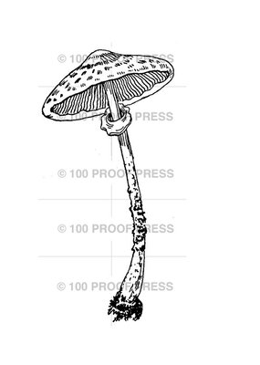 100 Proof Press Stamp Tall Mushroom