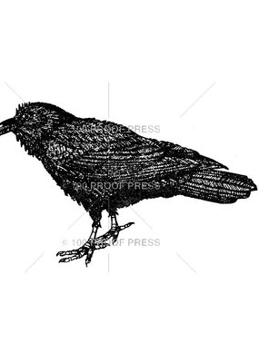 100 Proof Press Stamp Large Raven
