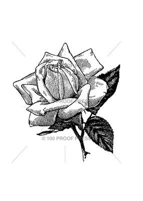 100 Proof Press Stamp Hybrid Tea Rose