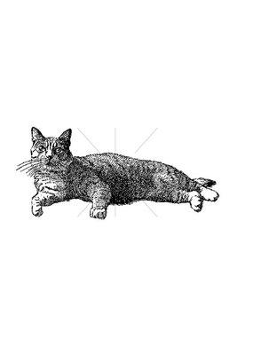 100 Proof Press Stamp Reclining Cat