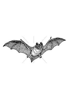 100 Proof Press Stamp Flying Bat