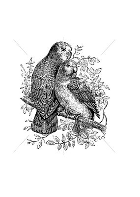100 Proof Press Stamp Love Birds