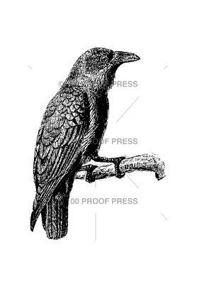 100 Proof Press Stamp Raven