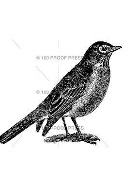 100 Proof Press Stamp Spring Robin