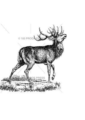 100 Proof Press Stamp Buck in Marsh