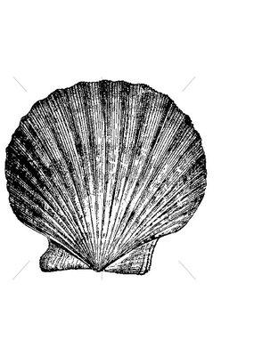 100 Proof Press Stamp Pilgrim's Scallop Shell