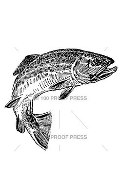 100 Proof Press Stamp Brook Trout