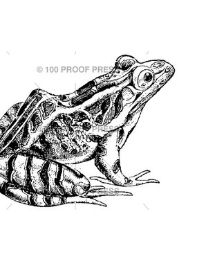 100 Proof Press Stamp Life Size Frog