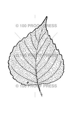 100 Proof Press Stamp Birch Leaf