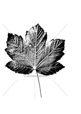 100 Proof Press Stamp Large Maple Leaf