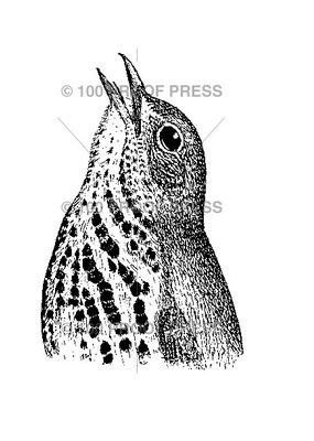 100 Proof Press Stamp Wood Thrush Head