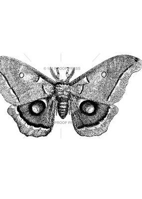100 Proof Press Stamp Polyphemus Moth