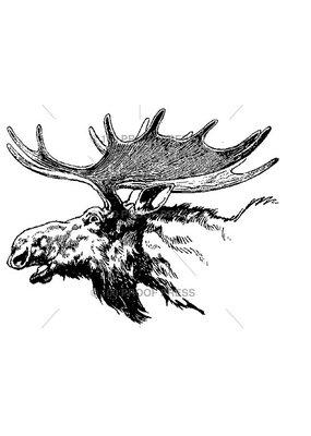 100 Proof Press Stamp Moose Head