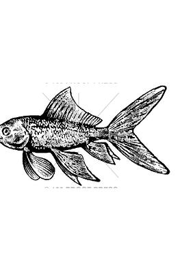 100 Proof Press Stamp Goldfish