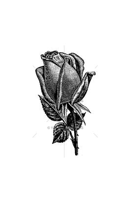 100 Proof Press Stamp Classic Closed Rose Bud