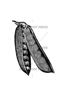 100 Proof Press Stamp Pea Pods