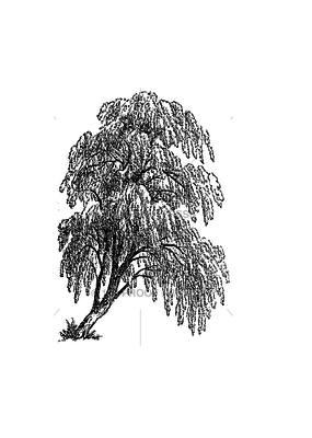 100 Proof Press Stamp Willow Tree