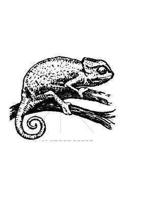 100 Proof Press Stamp Chameleon