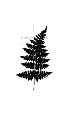 100 Proof Press Stamp Dark Fern Leaf